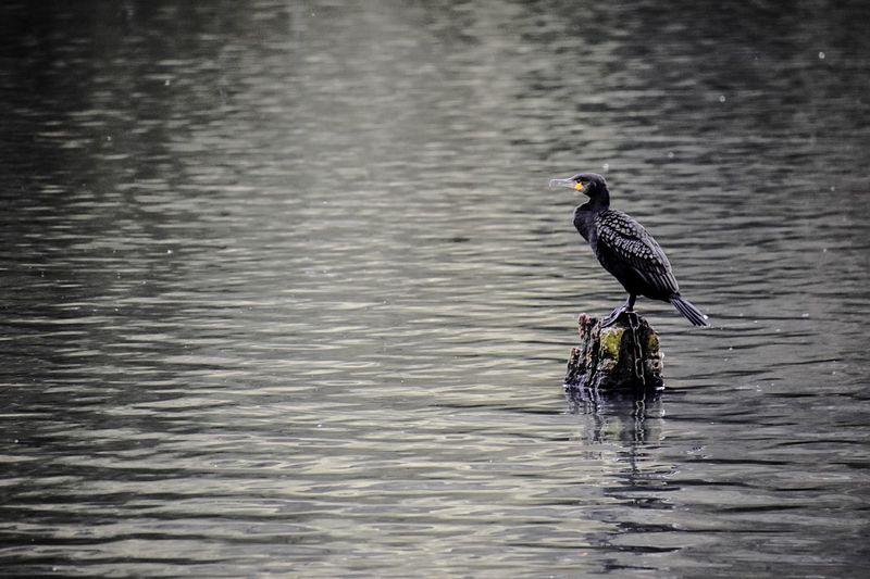 Bird perching on lake