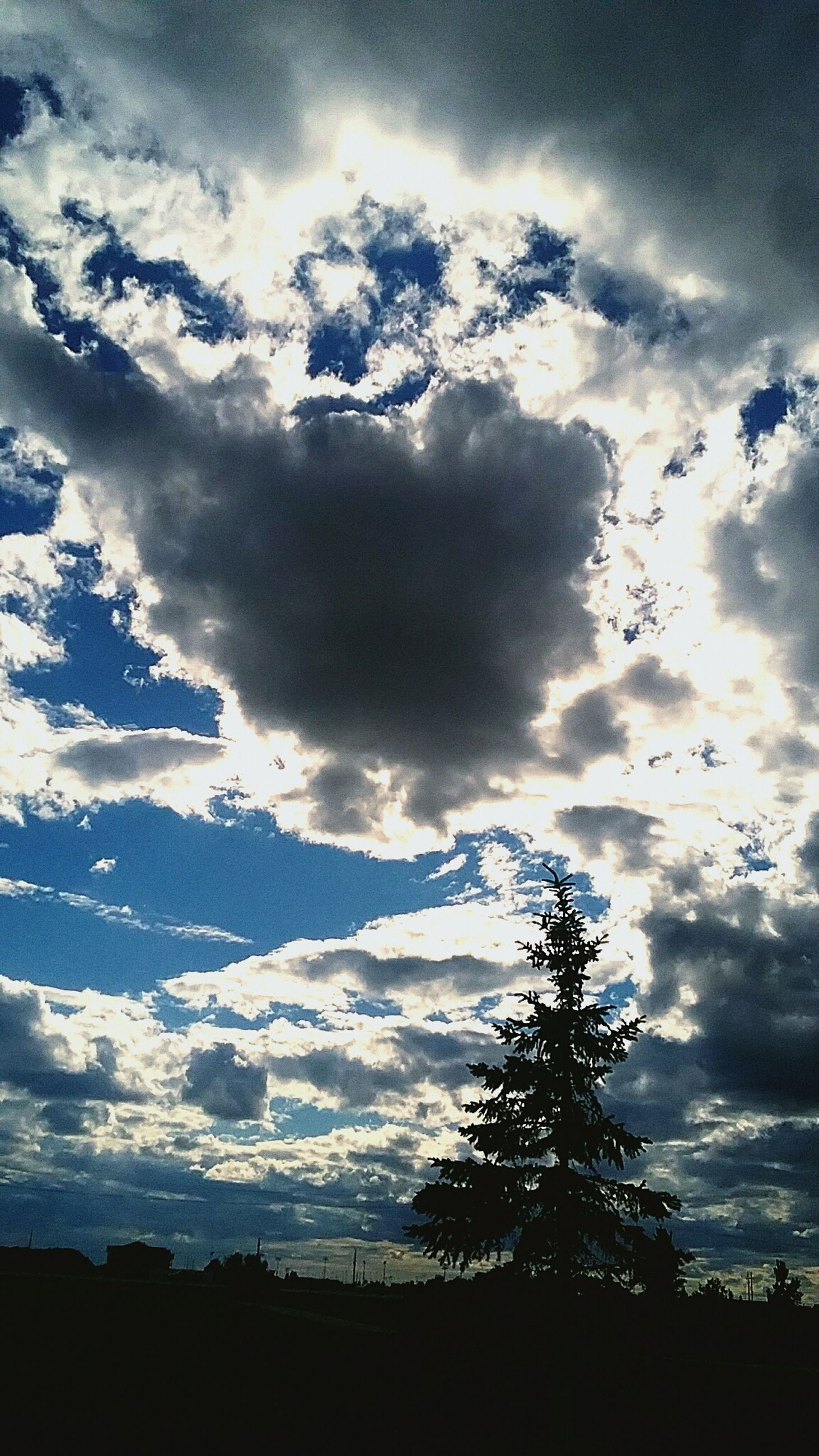 silhouette, cloud - sky, sky, tree, beauty in nature, no people, nature, tranquil scene, tranquility, scenics, outdoors, low angle view, day, landscape, sunlight