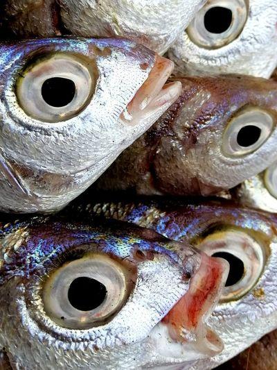 Full Frame Fish
