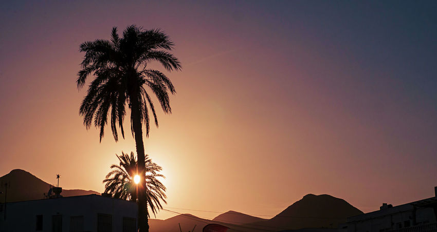 Against The Light Desert EyeEmNewHere Beach Mountain Outdoors Palm Tree Silhouette Sunset