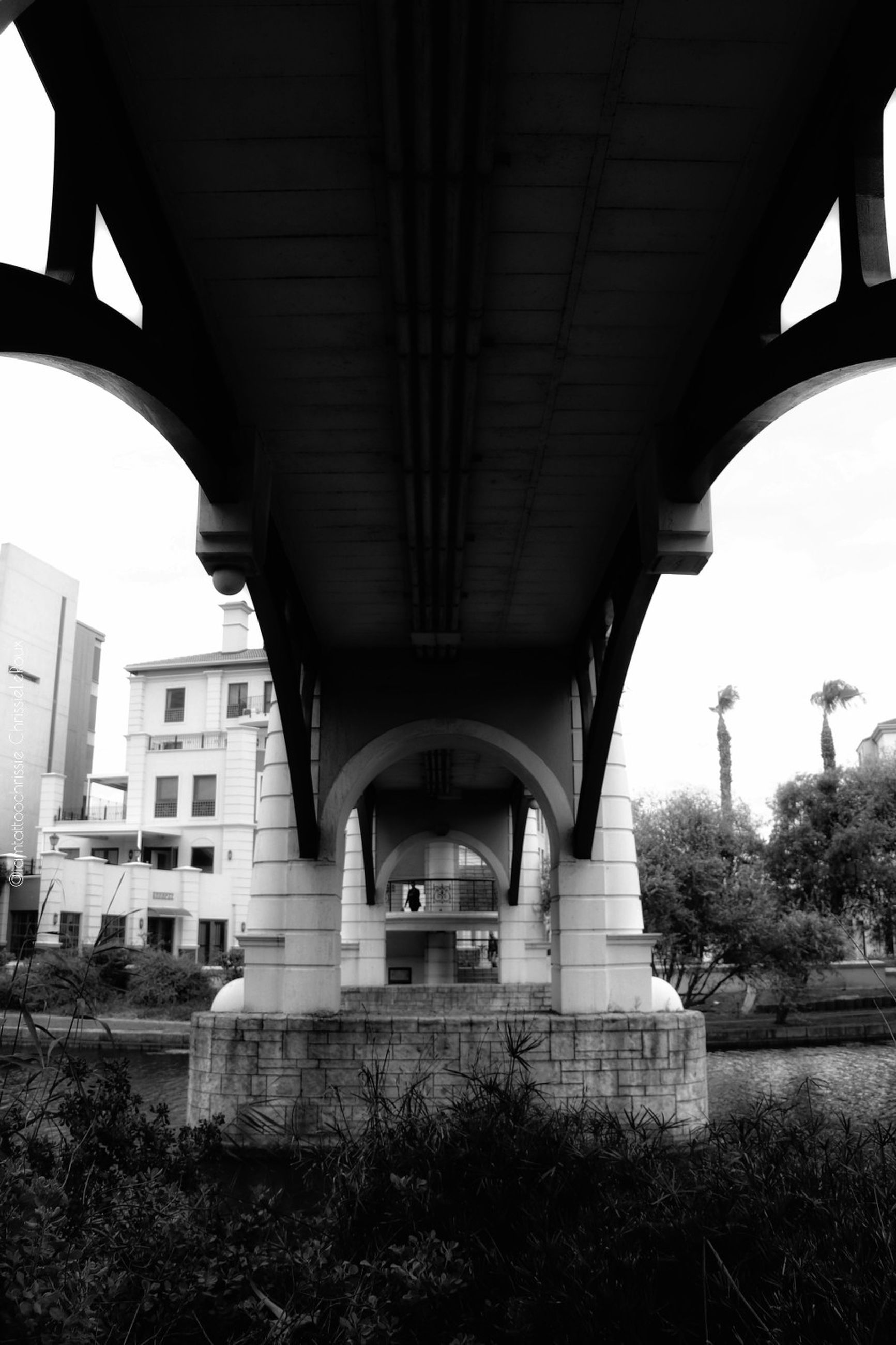 architecture, built structure, bridge, bridge - man made structure, connection, transportation, building exterior, day, plant, no people, architectural column, low angle view, city, nature, tree, arch, outdoors, building, water, arch bridge, underneath