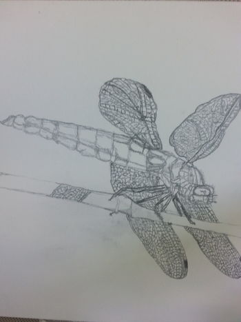 Botony Original Drawing Black And White Sketch Dragonfly Drawing Of Dragonfly God Is The Artist Insect World Life Mother Nature Original Drawing River Life Southern Summers Summer Translucent Winged Insect Winged Things Wings