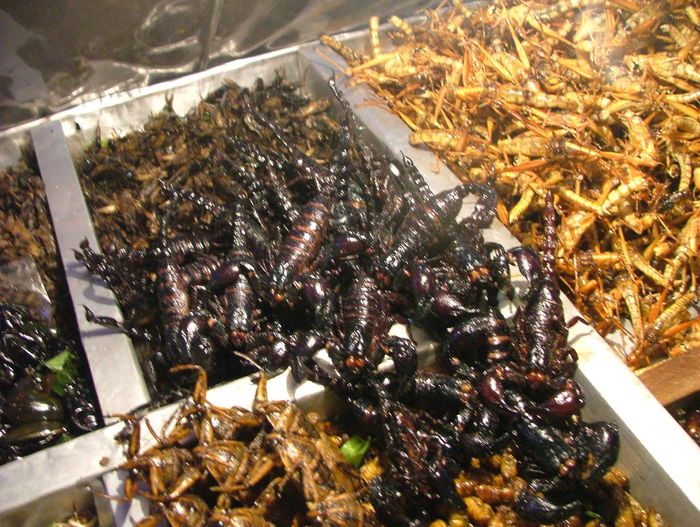 Abundance Close-up Exotic Fried Food Food Food And Drink Freshness Fried Food Fried Insects Insects  No People Ornate. Ready-to-eat Still Life Street Food. Window