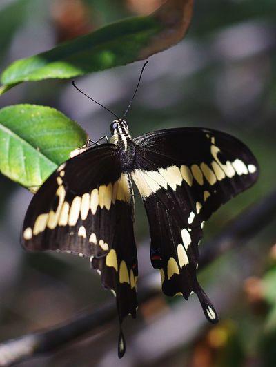 animal wing