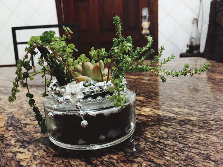 Plant No People Close-up Handmade For You Jardim No Pote Terrarium🍀 Nature In Botle