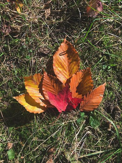 Nature Field Grass Leaf High Angle View Outdoors Fragility No People Autumn Flower Beauty In Nature Day Close-up Flower Head Leaves Fall Nature Stucks Red Orange Green Triangle Inspirational Inspirat Beautifully Organized
