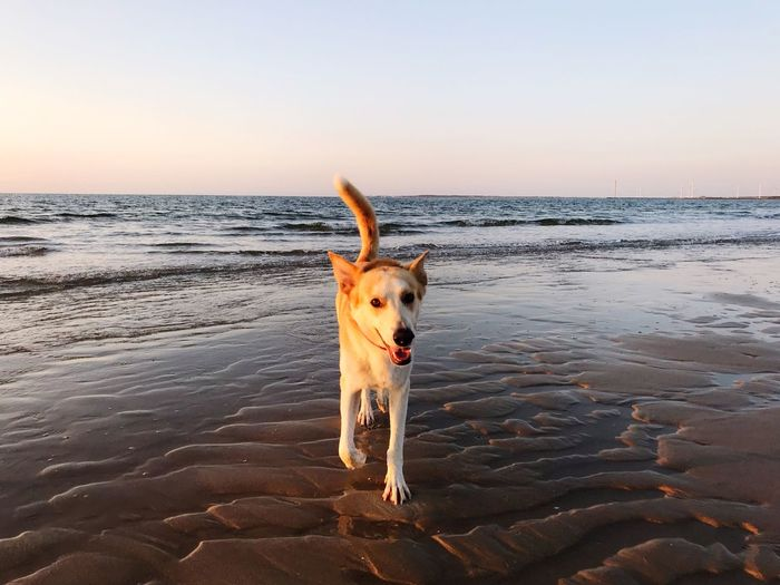 Water Dog Canine Mammal Beach Sea Moments Of Happiness One Animal Domestic Animals Horizon Over Water Animal Scenics - Nature Animal Themes Pets
