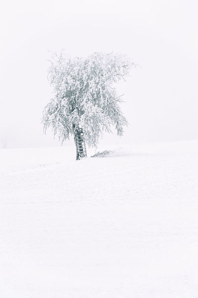 Austria Fine Art Photography Winter Contemplation Europe Green Landscape #Nature #photography Landscapes With WhiteWall Lihts And Shadows Nature Quiet Quiet Places Recovery Recreation  Regeneration Relaxing Rest Save The Nature Season  Seasons Sky Time-Out Tranquil Scene Tranquility Snow