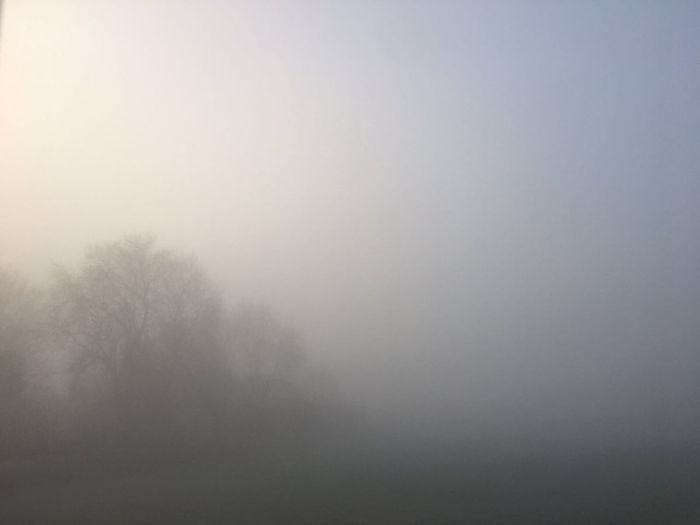 😂 lol woke up to this view this morning! Nature Fog Tranquility Weather Tranquil Scene Tree Hazy  Beauty In Nature Scenics No People Mist Idyllic Outdoors Day Bare Tree Sky there is something hiding in the photo if you find it leave a comment 😂 Check This Out