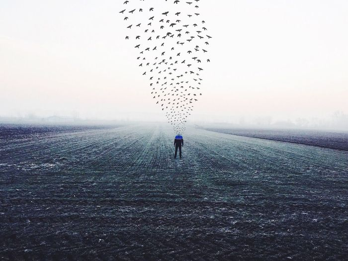 Man watching flying birds in field