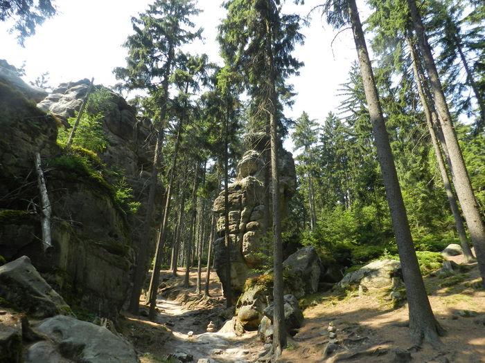 Czech Mountains Czech Republic Forest Frog Landscape Nature Rock Rocks Sightsee Steny Stone Tree Woods