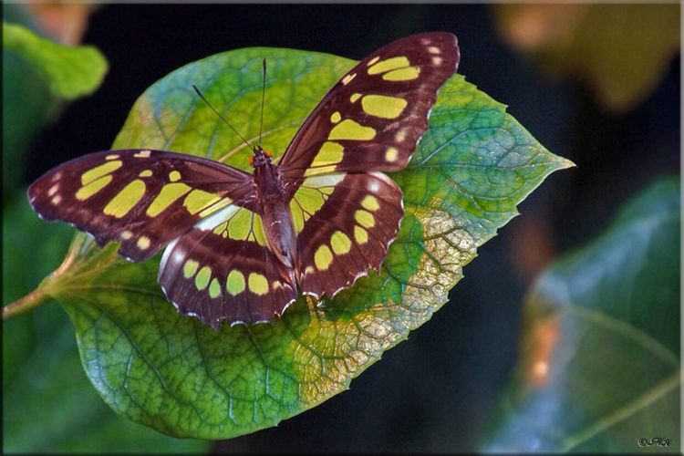 Butterfly Animal Themes