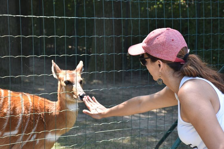Midsection Of Woman With Deer Against Fence In Zoo