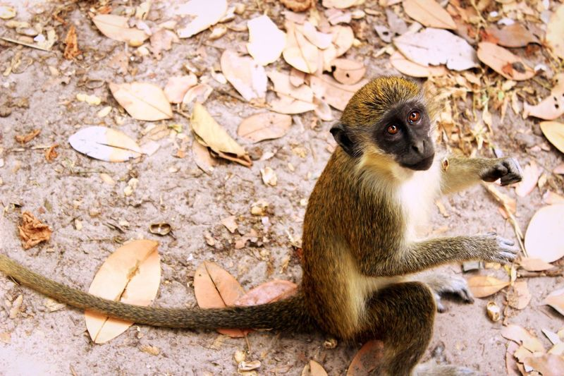 Finding New Frontiers Monkey Wildlife Africa Animals