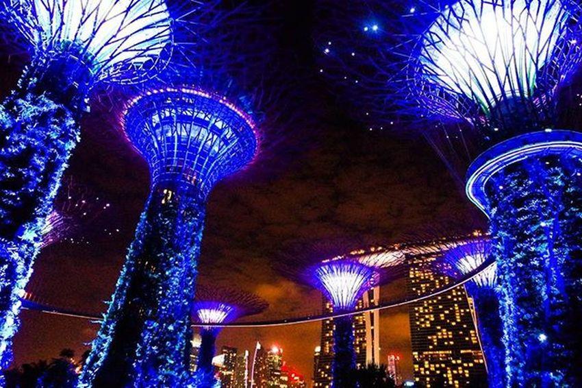 여기구경하다가 해외에서막차를놓ㅊ.. _ 싱가포르 싱가폴 야경 풍경 가든스바이더베이 여행 해외여행 빈카메라 Singapore Night Landscape Gardensbythebay Travel Trip Bincamera