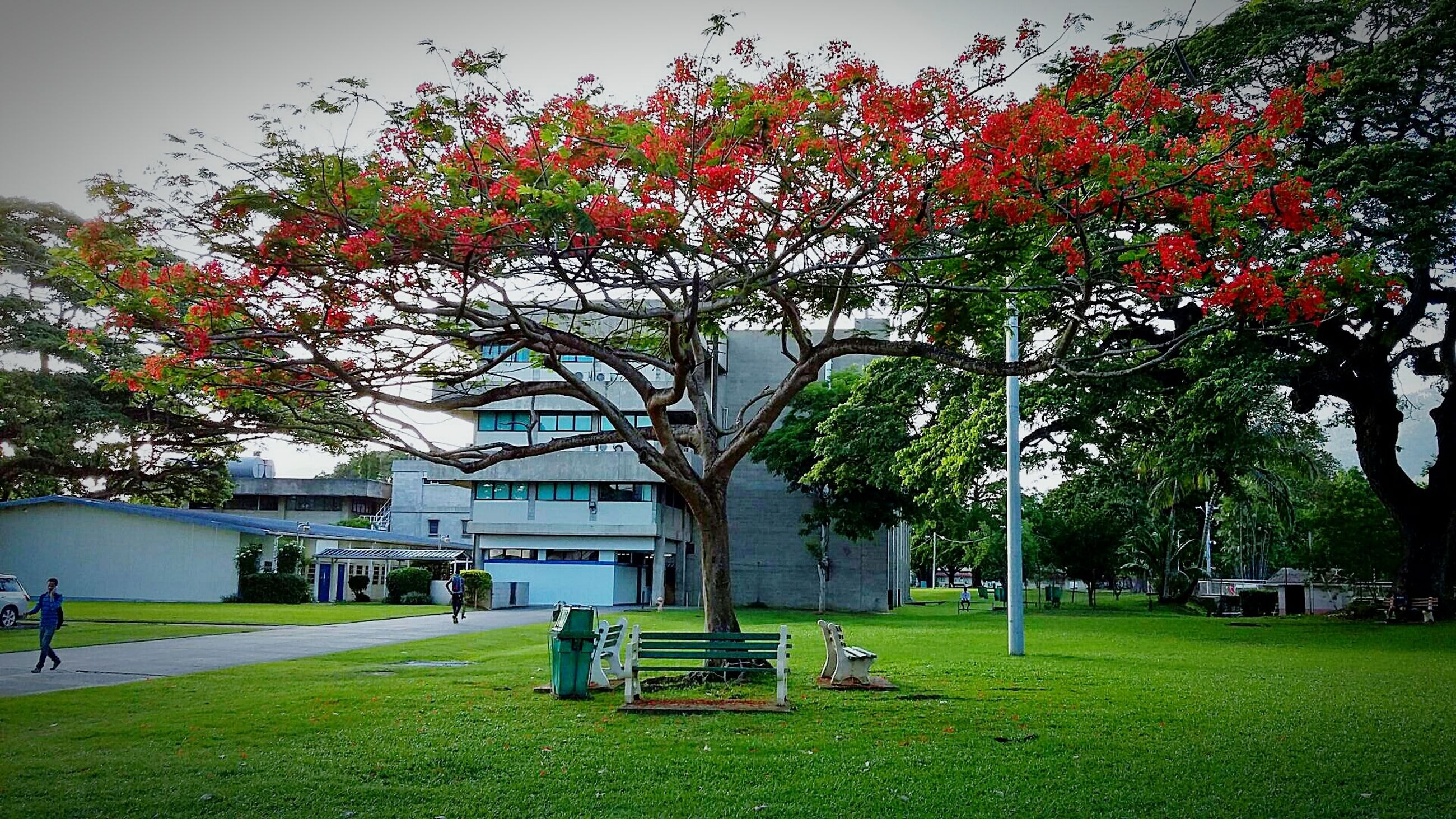 tree, grass, lawn, built structure, park - man made space, green color, growth, park, nature, flower, sky, day, outdoors, beauty in nature, grassy, yard, city, tranquility, travel destinations, tree trunk, plant, blossom
