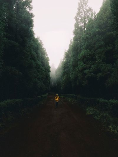 Favorite season of the year. Adventure Simplicity Azores Nature_collection Nature Selfportrait Fog EyeEm Best Shots Tree Plant Sky Growth Nature Transportation Beauty In Nature Tranquility Scenics - Nature Outdoors Land Tranquil Scene Day Environment Road Autumn Mood