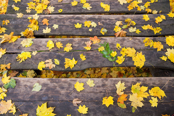Autumn Autumn Background Beauty In Nature Change Close-up Colorful Day Flower Fragility Freshness Full Frame Growth Ladder Leaf Maple Maple Leaf Nature No People Outdoors Plant Stairways Tourist Trail Wooden Planks Wooden Texture Yellow Place Of Heart