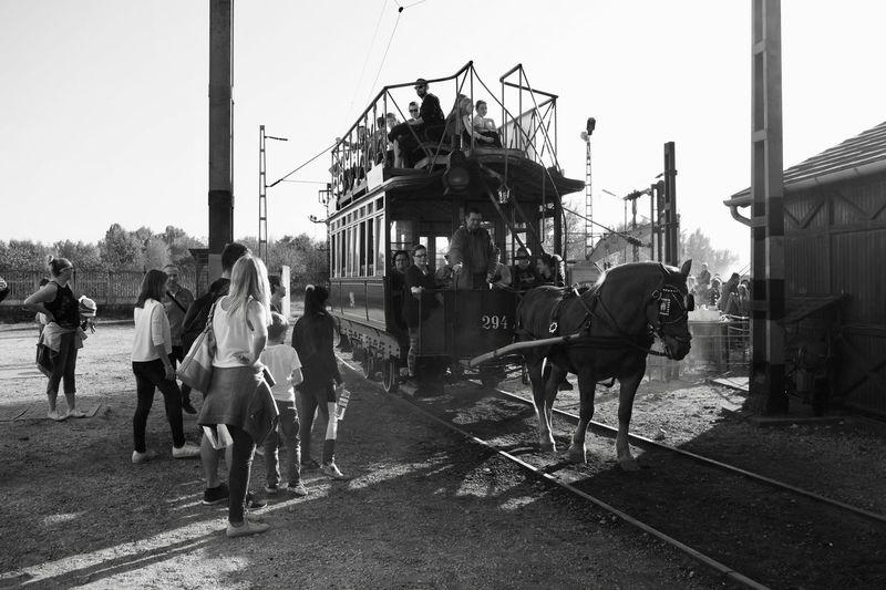 Track Horse