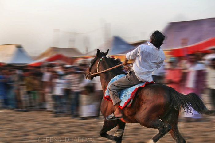 Indianphotography Riding Jockey Indianstories Horse Indianphotographersclub Delhiphotographers Indianphotographers Horseback Riding Barmer Tourism Barmer India Barmerdiaries Rajasthan Beauty Barmer Horserace Rajasthantourismofficial Animal Themes Competition Travel Destinations Rajasthan Rajasthantourism Domestic Animals Indianphotographer Sports Race Desert