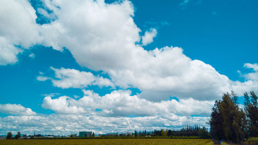 Cloud - Sky Sky Beauty In Nature Tranquility Scenics - Nature Tranquil Scene Landscape Environment Plant Nature Tree No People Day Blue Land Non-urban Scene Outdoors Field Idyllic Grass