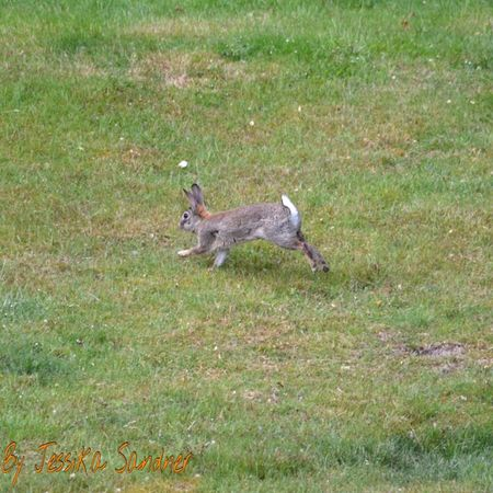 Hase Kaninchen Wildlife Bunny  Bunnys Nature Nature_collection Tiere Animal Animals