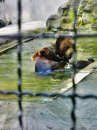 📷🐻😍 Bears