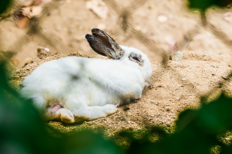 High angle view of rabbit on field