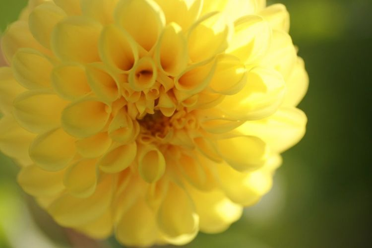Flower Yellow Nature Beauty In Nature EOS Kiss Digital X Close-up
