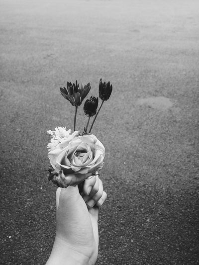 🌹Flower Human Hand Human Body Part One Person Holding Human Finger Real People Nature Day Outdoors People Close-up Beauty In Nature Freshness Fragility Adult Flower Head Flower Flowers Cute♡ Flowers, Nature And Beauty Flowers The Secret Spaces