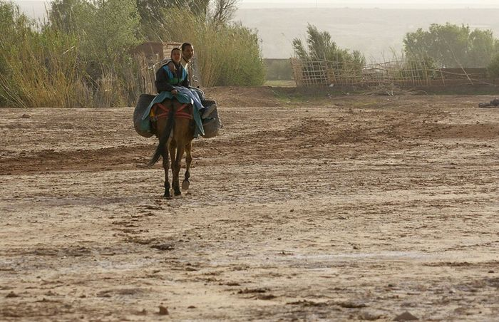 rural Morocco . Horse Horseback Riding Young Adult Outdoors Morocco