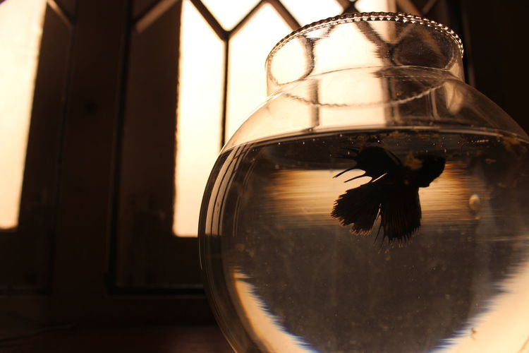 Beta Fish Animal Themes Transparent Animal One Animal Glass - Material Vertebrate Animal Wildlife Animals In The Wild Indoors  Nature No People Water Reflection Fishbowl Window Bird Close-up Swimming Glass Electric Lamp