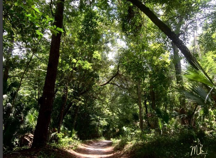Forest path Check This Out Forest Adventure Forest Path TM Productions Trees Wildlife & Nature Nature Photography Nature_collection