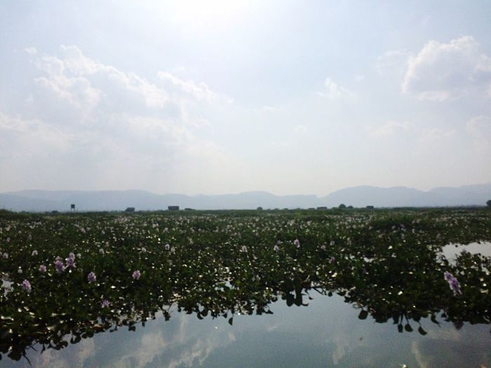 Nature Beauty In Nature Growth Flower Sky Plant Tranquility Water No People Scenics Tranquil Scene Day Reflection Outdoors Lake Fragility Freshness Landscape Tree Lake View ASIA Myanmar View Myanmarphotos Tourism Myanmar The Week On EyeEm EyeEmNewHere