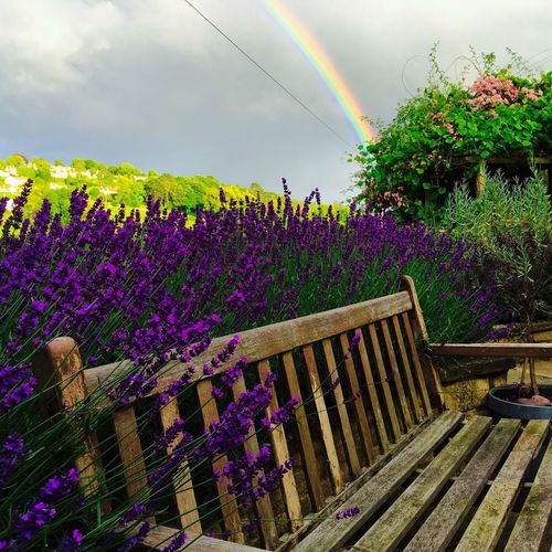 Rainbow and Lavender 😎