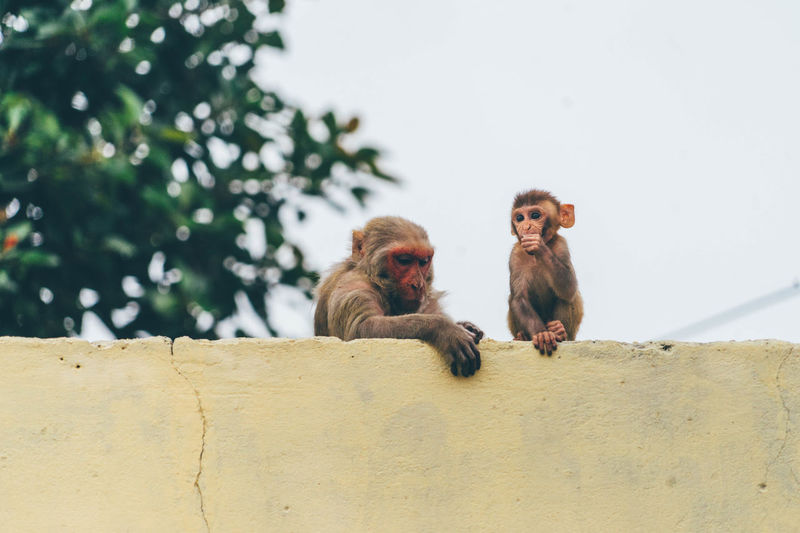 Monkeys By Retaining Wall Against Sky