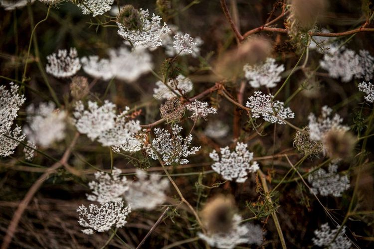 Close-up of frozen flowers