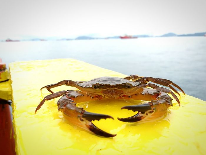 Close-up of crab on pier against lake