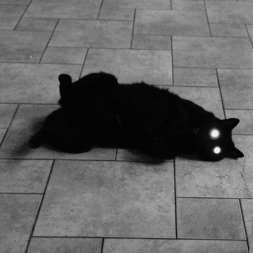 Cats eyes Cat Relaxing Warm Floor Black Cat My Black Cat Flash