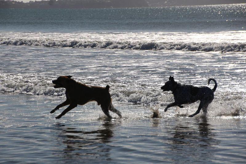 Dogs Running On Beach Against Sea