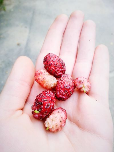 By Me Taking By Me Photography MyPhotography Taking Photos Myphoto Photo Taking Photo Myhand EyeEm Food Lovers Strawberries Red Strawberries Eat Strawberries Delicious Fruit Delicious Strawberry Shot Strawberry Lover! Strawberry Love Me That's Me I'm Enjoying Life Hello World In Grandfather House Delicious