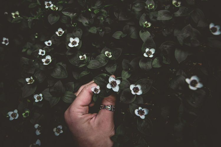 High angle view of woman hand holding flower