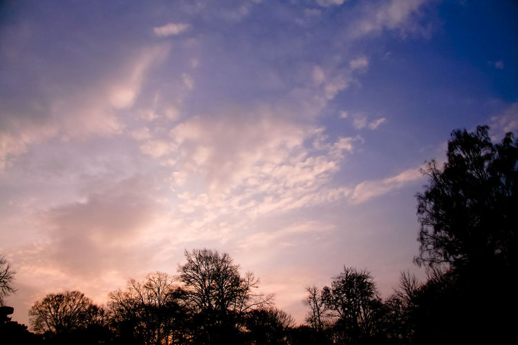 Sky Cloud - Sky Tree Sunset Silhouette Beauty In Nature Nature Scenics - Nature No People Tranquility Low Angle View Tranquil Scene Outdoors Dusk Dramatic Sky Orange Color Blue Idyllic Treetop