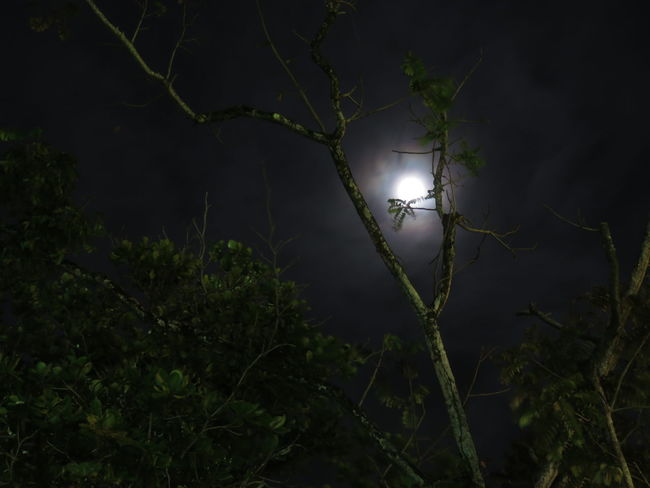 Night Spooky Tree Moon Illuminated Outdoors Nature Beauty In Nature Tree Area Sky Costa Rica Nature Rainy Season Tranquil Scene Dramatic Sky Noedit Majestic Beach Limon Puerto Port EyeEmNewHere