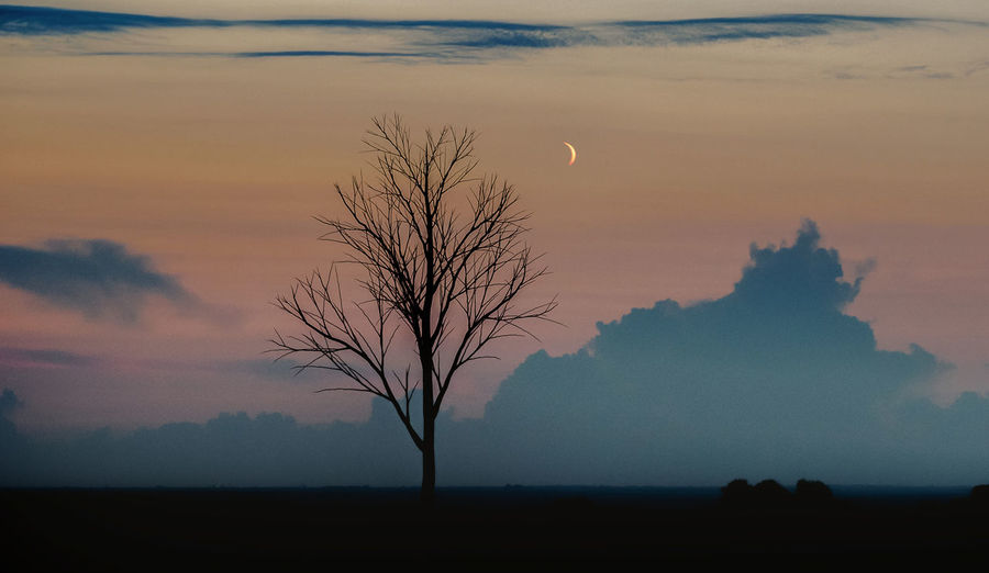 Sky Beauty In Nature Scenics - Nature Bare Tree Tranquil Scene Silhouette Tree Tranquility Plant Sunset Non-urban Scene Nature Cloud - Sky No People Environment Landscape Orange Color Field Outdoors Dusk
