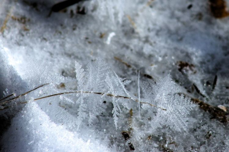 Close up of snow/ice/frozen Snow Ice Frozen Close-up Snow Crystals Snow Flakes Cold Temperature Winter No People Nature Day White Color Leaf Focus On Foreground Beauty In Nature Selective Focus Plant Outdoors Frost Covering Leaves Powder Snow