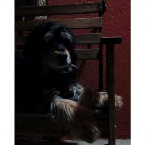 Instasize Dog Mydog Darkness Taking Photos Nightphotography Shadows BeautifulPic EyeEm Gallery Pets Corner