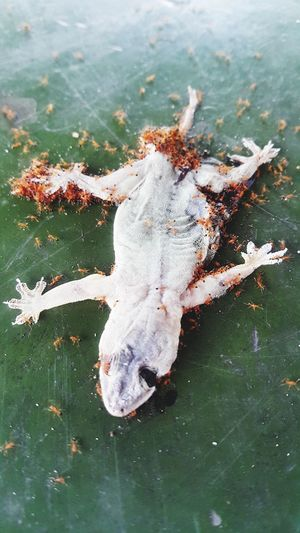 lizards and