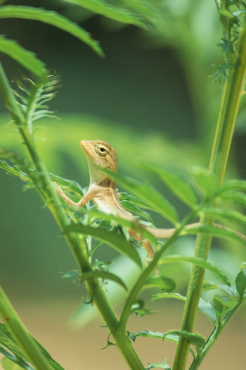 Close-up of a lizard on plant