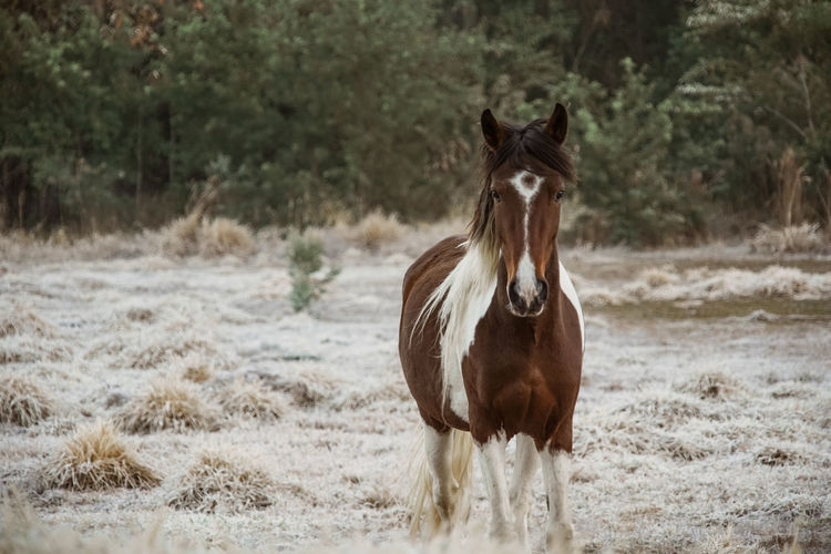 Portrait of horse standing on field